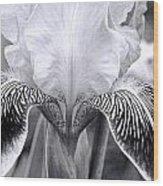 Iris 11 Wood Print