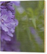 Jacaranda Mimosifolia Makawao Maui Hawaii Wood Print