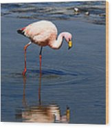 James Or Puna Flamingo Wood Print