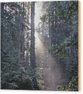 Jedediah Smith Redwoods State Park Redwoods National Park Del No Wood Print
