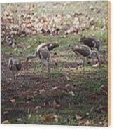 Juvenile Ibis Wood Print