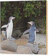 Juvenile Nz Yellow-eyed Penguins Or Hoiho On Shore Wood Print