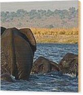 Kalahari Elephants Crossing Chobe River Wood Print