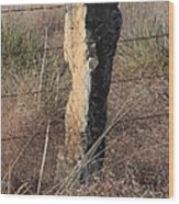 Kansas Country Limestone Fence Post Close Up With Grass Wood Print