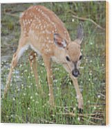 Key Deer Fawn Wood Print