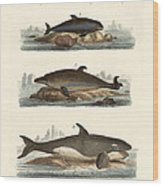 Kinds Of Whales Wood Print