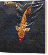 Koi Carps Wood Print