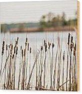 Lake Mattamuskeet Nature Trees And Lants In Spring Time  Wood Print