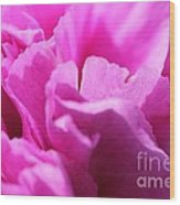 Lavender Carnation Wood Print
