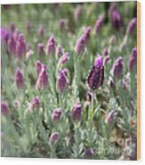 Lavender Standout Wood Print by Carol Groenen