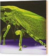 Leafhopper, Sem Wood Print by David M. Phillips