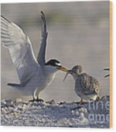 Least Tern Feeding It's Young Wood Print