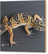 Leopard Gecko Eublepharis Macularius Wood Print