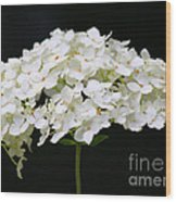 Les Fleurs Wood Print