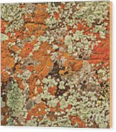 Lichen Abstract Wood Print