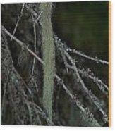 Lichen Wood Print