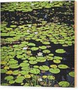 Lily Pads On Dark Water Wood Print