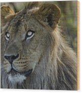 Lion King  Wood Print