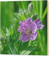 Little Blue Flowers Wood Print