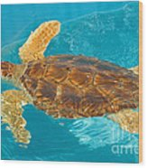 Loggerhead Sea Turtle Wood Print