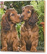 Long-haired Dachshunds Wood Print
