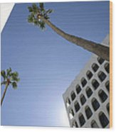 Looking Up In Beverly Hills Wood Print