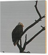 Looking Up To Bald Eagle's Wood Print