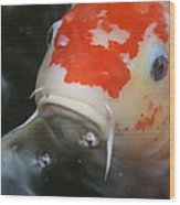 Lucky Koi 1 Wood Print