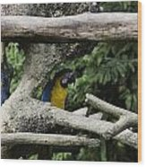 2 Macaws Framed By Tree Branches Inside The Jurong Bird Park Wood Print