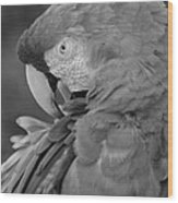 Macaws Of Color B W 17 Wood Print
