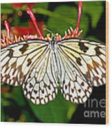 Malabar Tree Nymph Butterfly Wood Print