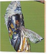 Malachite Butterfly Metamorphosis Wood Print