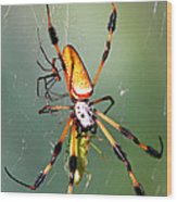 Male And Female Silk Spiders With Prey Wood Print