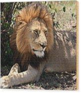 Male Lion On The Masai Mara  Wood Print