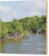 Mangrove Forest Wood Print by Carol Ailles