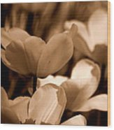 Many Tulips Wood Print