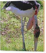 Marabou Stork Wood Print