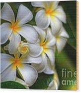 Maui Plumerias Wood Print