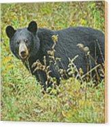 Meadow Black Bear Wood Print