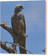 Merlin Falcon  Wood Print