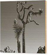 Joshua Tree National Park Landscape No 2 In Sepia Wood Print
