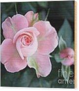 Miniature Pink Roses Wood Print