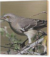 Mocking Bird With Ripe Hackberry Wood Print