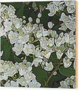 Momoko Wood Print