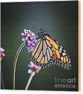 Monarch Butterfly Wood Print by Elena Elisseeva