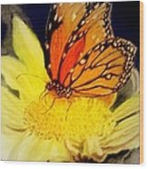 Monarch Resting Sold Pastel Wood Print