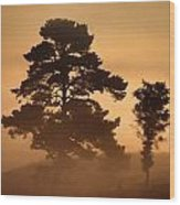 Moorland In The Morning Mist Netherlands Wood Print