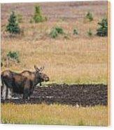 Moose  Wood Print