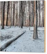 Morning Sun Wood Print by Andrea Galiffi