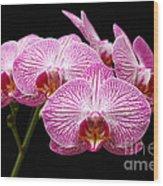 Moth Orchid Wood Print